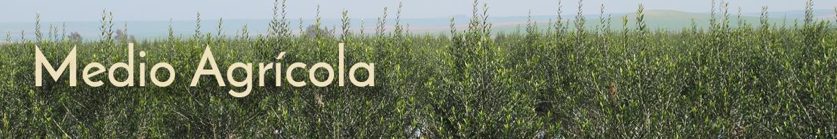 Medio-Agricola